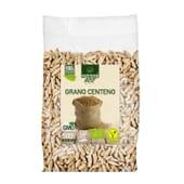 Centeno en Grano Bio 500g - Nutrione ECO - 100% Ecológico