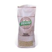 Trigo Sarraceno 500g da Biocop