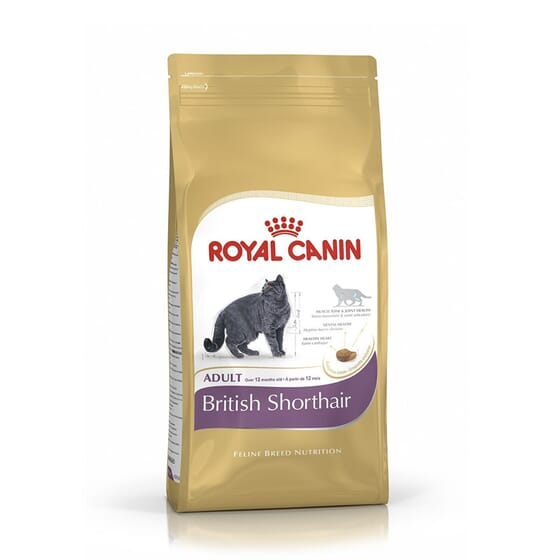 Pienso Gato British Shorthair Adulto 2 Kg de Royal Canin