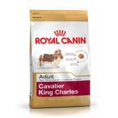 Ração Cavalier King Charles Adulto 1,5 Kg da Royal Canin