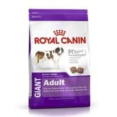 Ração Cão Adulto Raças Gigantes Frango 15 Kg da Royal Canin
