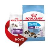 Croquettes Chiot Race Géante Starter Mother & Babydog 15 kg de Royal Canin