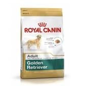 Ração Golden Retriever Adulto 12 Kg da Royal Canin