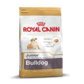 Ração Bulldog Junior 3 Kg da Royal Canin