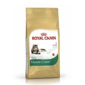 Ração Gato Adulto Maine Coon 10 Kg da Royal Canin