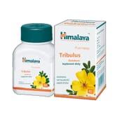 Gokshura (Tribulus Terrestris) 60 Caps da Himalaya Herbals
